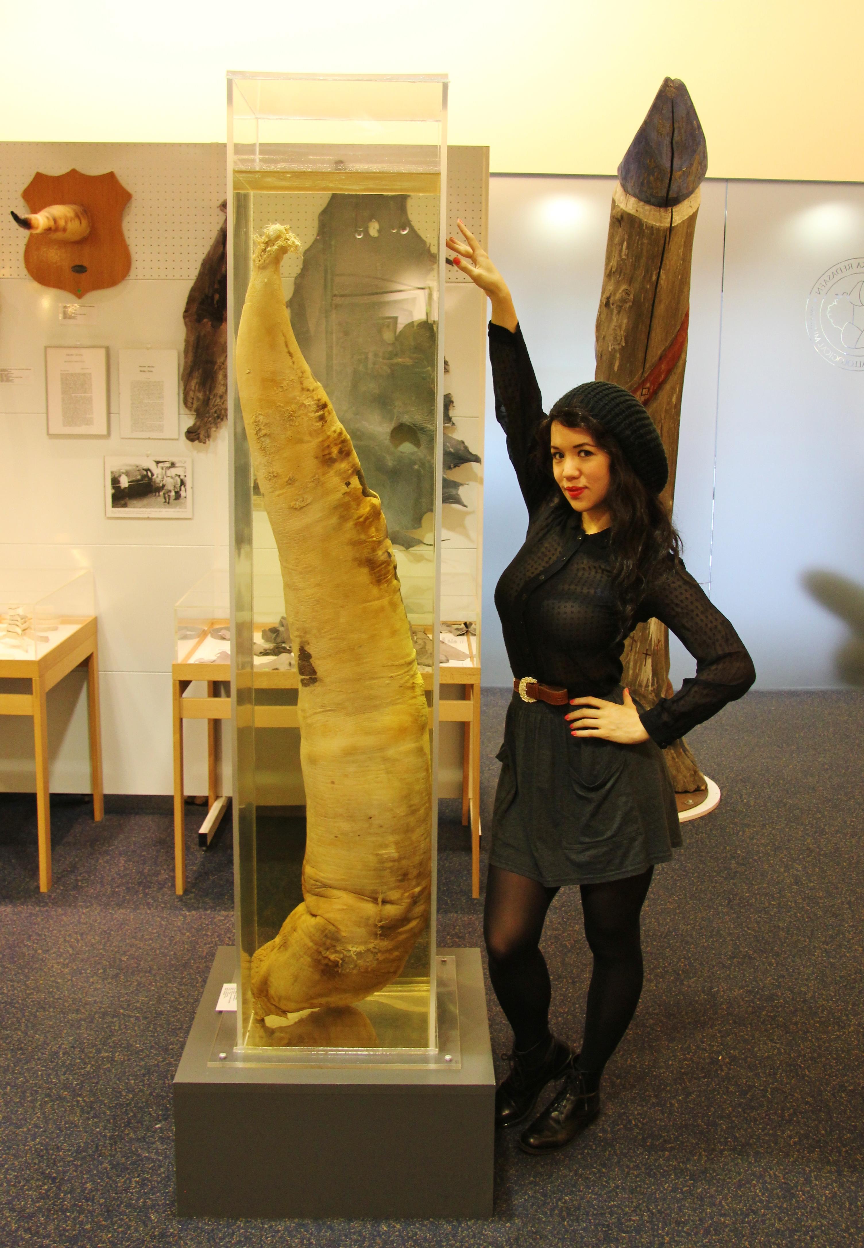 Inside-Icelands-Penis-Museum-Reykjavik