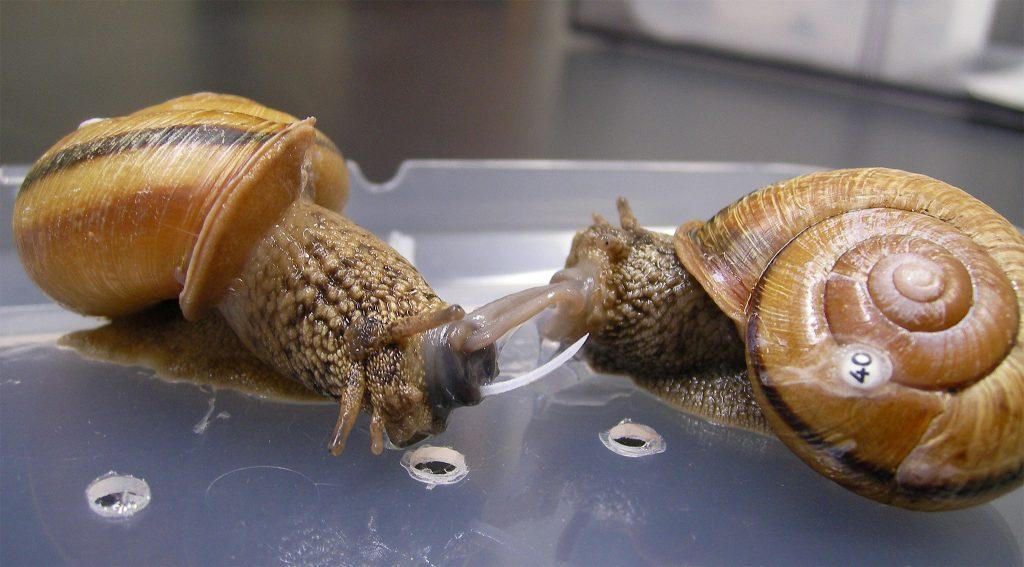 snaillovedart01